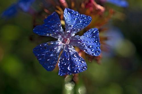 floweryfleur